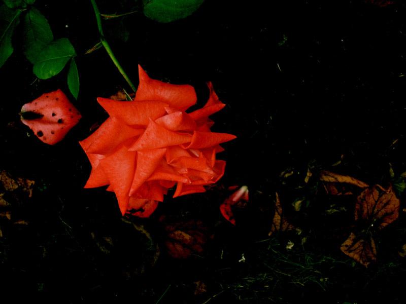 thorns poem