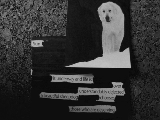 white dog collage poem